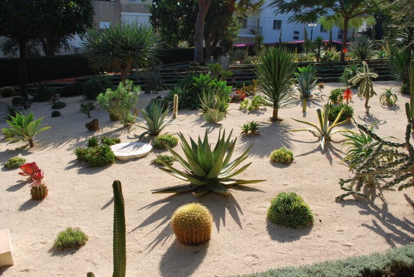 No grass front yard landscaping for Plants that require no maintenance