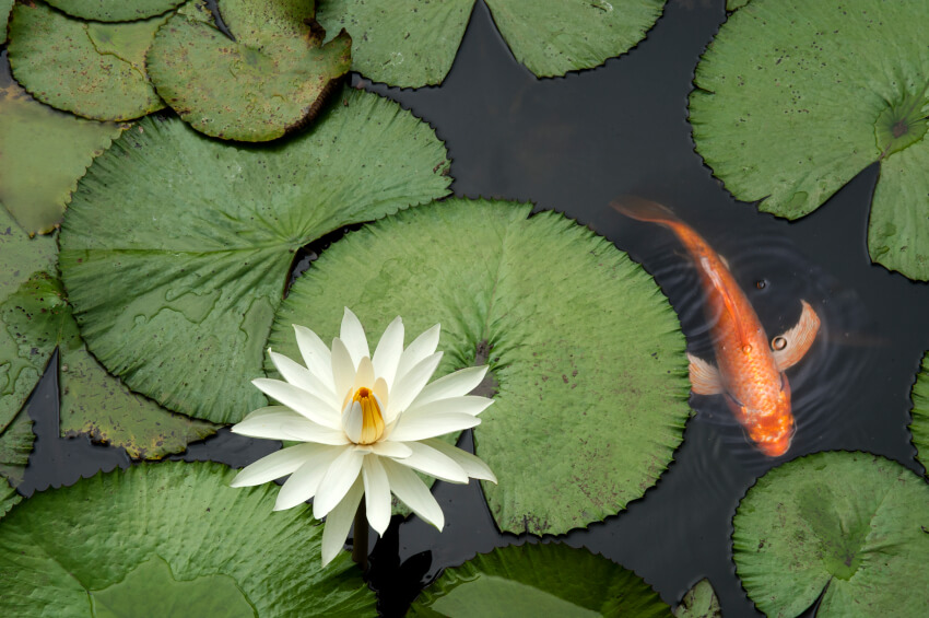 Stunning backyard pond ideas modernize for Goldfish pond ideas