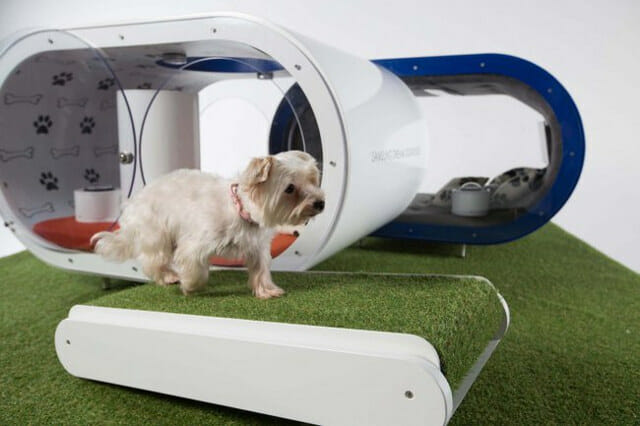 Samsung Dream Dog House