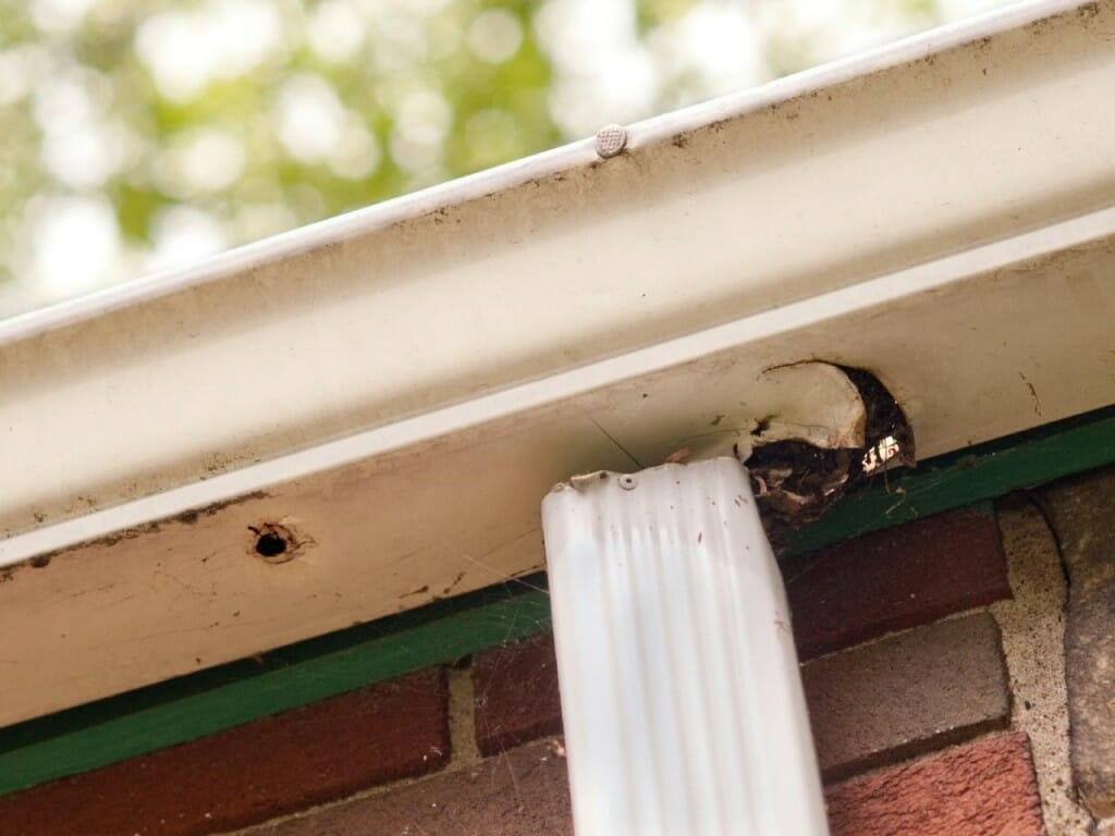 Maintaining Gutters And Downspouts Modernize