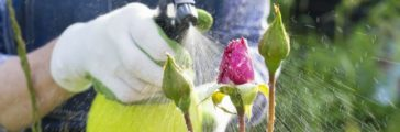 How to Lower Your Water Footprint in Your Garden