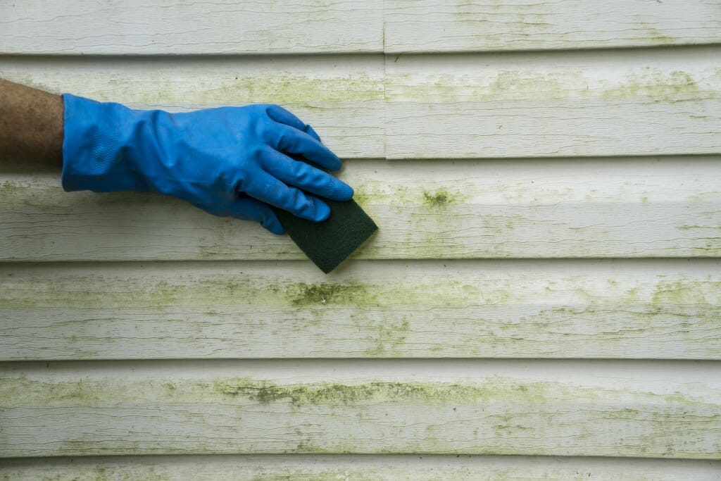 siding-cleaning