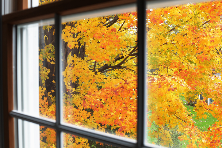 fall-autumn-window