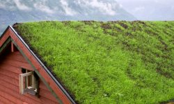 Green Roofs: Examples of Unique Eco-Friendly Roofs