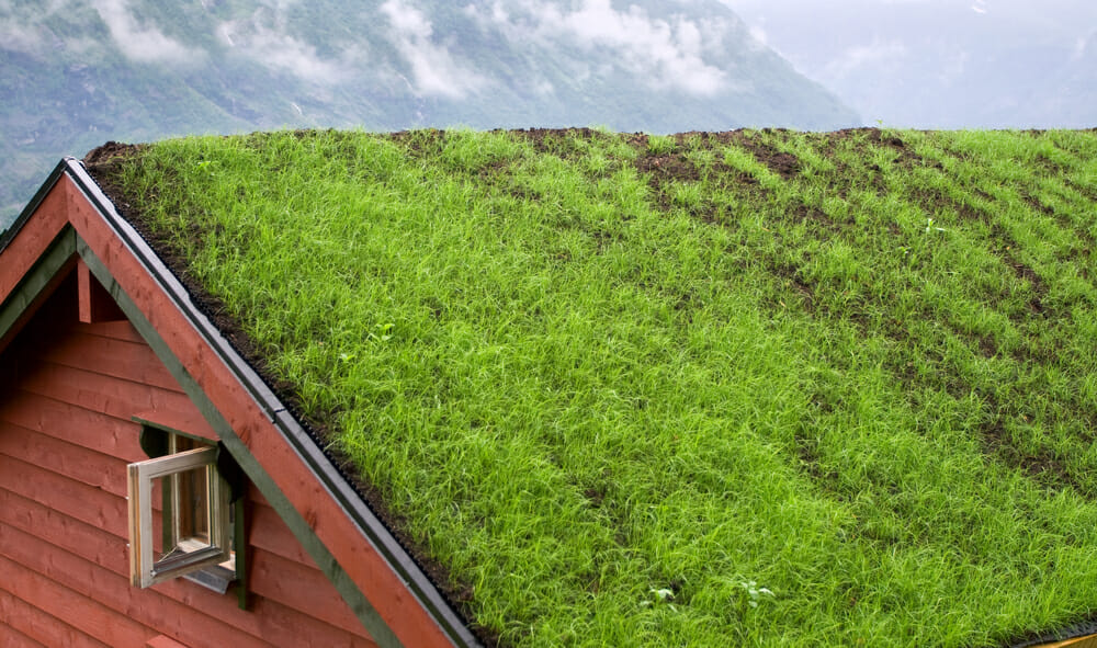 Green roof in mountains