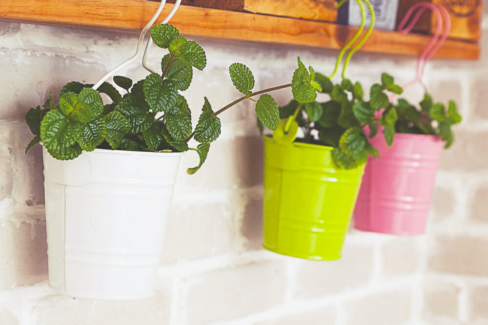 kitchen herb planters