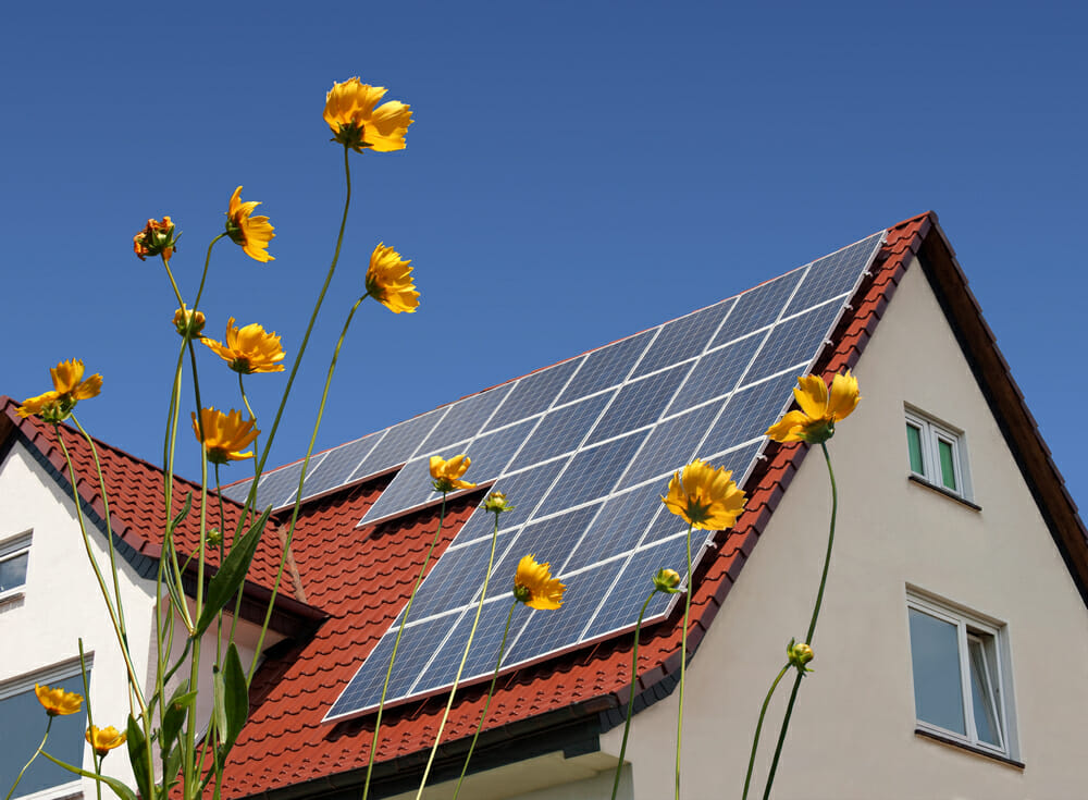 solar-panels-and-flowers