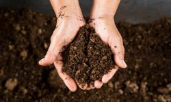 How to Use Leaves to Start a Home Composting System