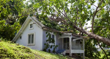 How Do You Fix a Roof That Has a Tree in It?