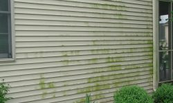 Types of Siding That Need to be Painted