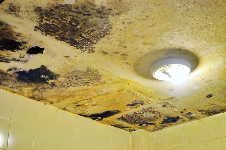 Water damaged ceiling and Fungus in bathroom