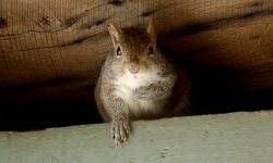 Ask an Expert: How Can I Keep Wildlife Out of My Home?