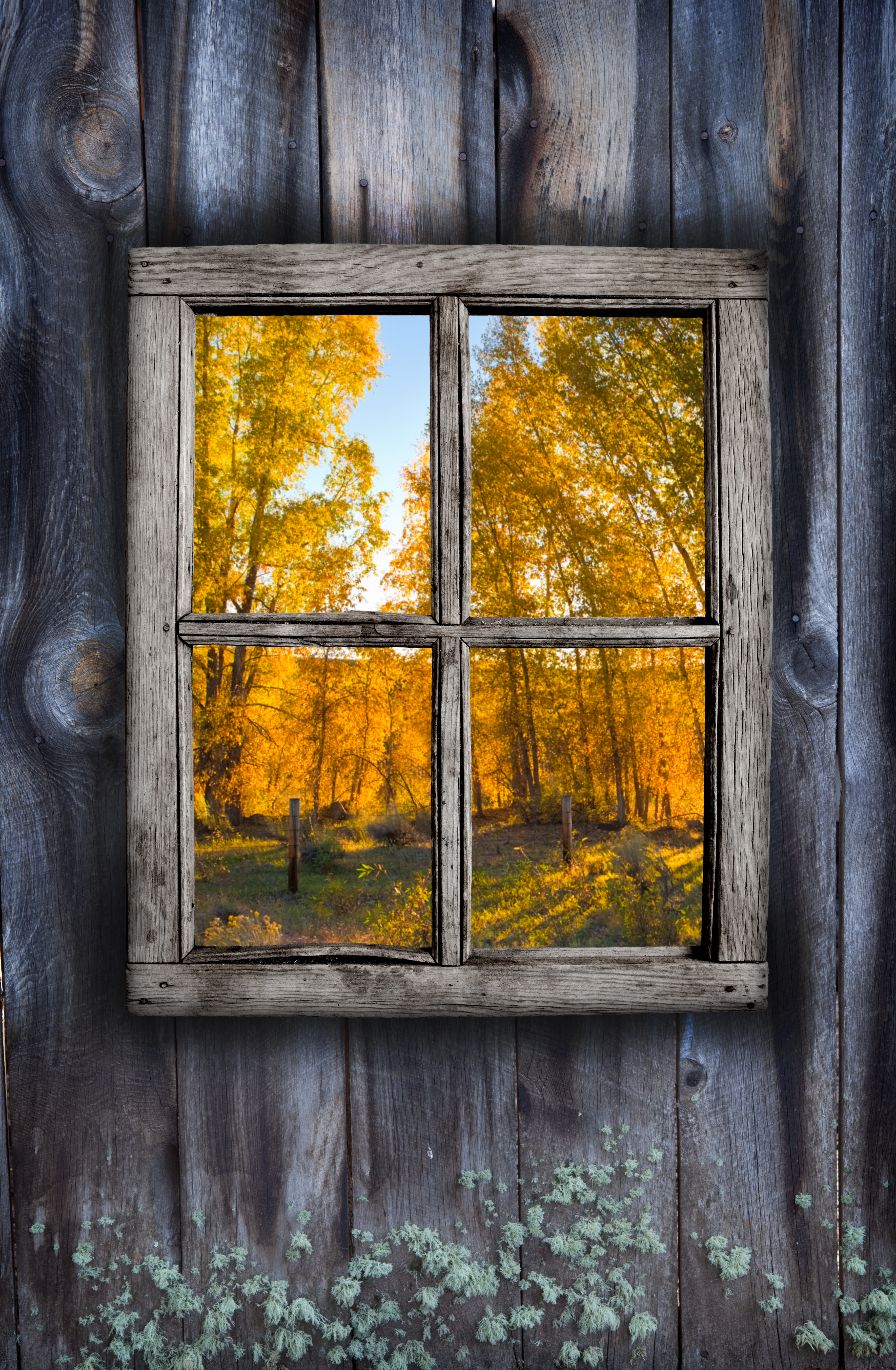 shed window fall background