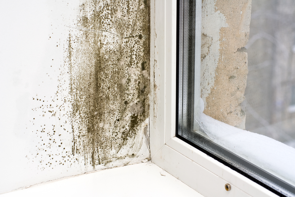 mold-on-windowsill