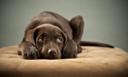 Pet Proof Your Home Renovation