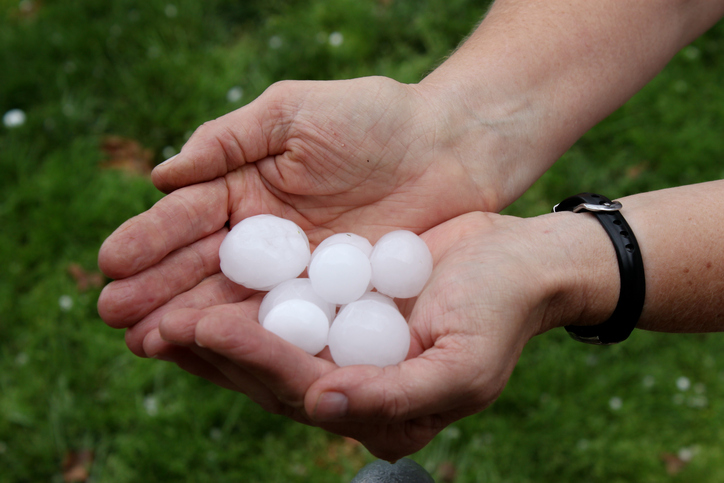 A pair of hands holding freshly dropped hail.