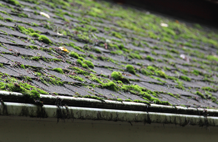 Mossy-roof