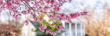 A Spring Maintenance Checklist for Homeowners